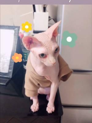 ❤️今天推荐的猫猫穿搭:卡其色卫衣 卡其色的套头卫衣,面料非常舒服~~适合春夏猫猫们穿,一般情况下猫咪也不会随意脱下来,特殊情况除外😂#我最推荐的一件穿搭单品#