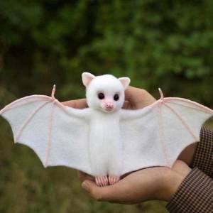 你们感受一下白的重要性~ 黑黑的蝙蝠🦇好恶心哦!感觉带了好多病毒🦠和细菌,想要远离他,可怕,这白色的蝙蝠怎么觉得那么萌萌哒呢?哈哈哈。一白遮百丑啊!赶紧白起来!姐妹~